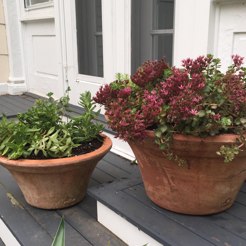 succulent-containers-sedum-1 – ARTEFACT HOME   GARDEN